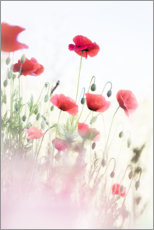 Premium poster Dancing poppies