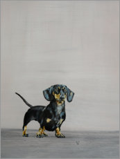 Wall sticker  Little Dachshund - Victoria Coleman