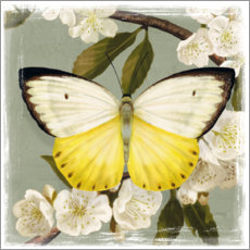 Premium poster Butterfly on a branch II