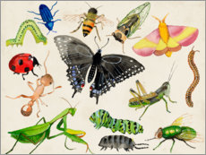 Premium poster  The world of insects - Alicia Ludwig