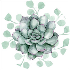 Canvas print  Succulent collection B - Grace Popp