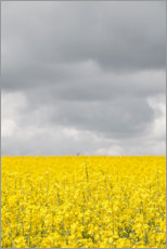 Premium poster  Grey & YELLOW fields - Studio Nahili