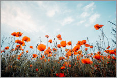 Canvas print  Poppy field in front of blue sky - Oliver Henze