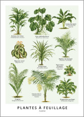 Premium poster  Foliage plants (french) - Wunderkammer Collection
