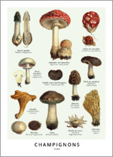 Premium poster Mushrooms (french)
