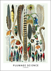 Wood print  Feathers - Wunderkammer Collection