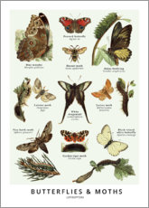 Acrylic print  Butterflies and moths - Wunderkammer Collection