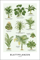 Premium poster Foliage plants (German)