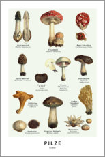 Canvas print  Mushrooms (german) - Wunderkammer Collection