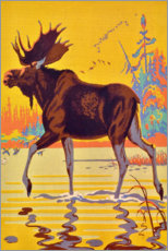 Premium poster  Moose in the moor - Travel Collection