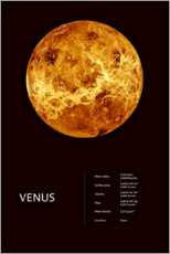 Premium poster Venus