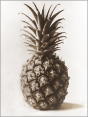 Wall sticker  Pineapple - Karl Blossfeldt