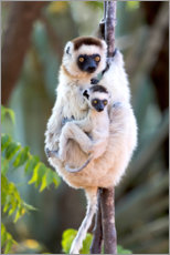 Wood print  Sifaka with her baby - Ellen B. Goff