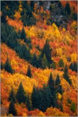 Premium poster  Autumn trees at Arrowtown - David Wall