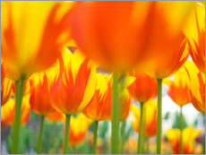 Canvas print  Red-yellow tulips - Terry Eggers