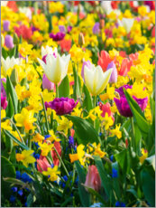 Premium poster  Multi-colored flowers in spring - Terry Eggers