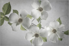 Canvas print  Dogwood branch - Jaynes Gallery
