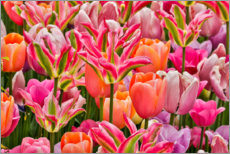 Canvas print  Tulips I - Holice Looney