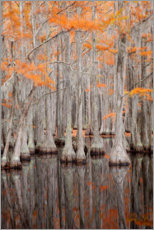 Premium poster  Cypress trees in autumn in Georgia - Joanne Wells
