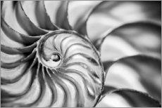 Acrylic print  The interior of a nautilus shell - Deborah Winchester
