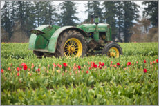 Premium poster  Tractor on a tulip field