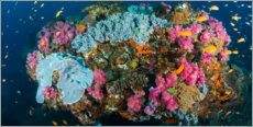 Premium poster  Corals surrounded by sea gold