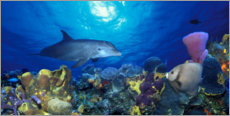 Canvas print  Bottlenose dolphin at the coral reef