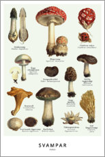 Foam board print  Mushrooms (Swedish) - Wunderkammer Collection