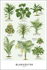 Premium poster Foliage plants (Swedish)