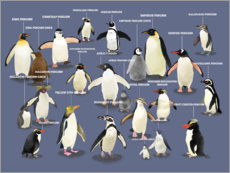 Acrylic print  Penguin species - Marc Pattenden