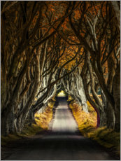 Premium poster  Autumn morning in the Dark Hedges - Jaroslaw Blaminsky