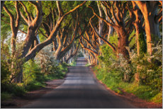 Canvas print  Tree avenue in the first morning light - Sven Müller