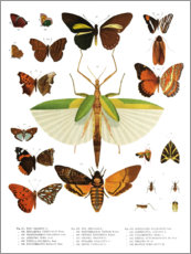 Premium poster Color splendor of insects IIX