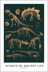 Premium poster  Paleontology - Wunderkammer Collection