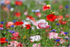 Gallery print  Flower meadow with poppies - fotoping