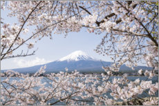 Premium poster Mountain Fuji with cherry blossom