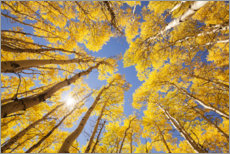 Wall sticker  Autumn-colored aspen forests of Colorado - Sven Müller