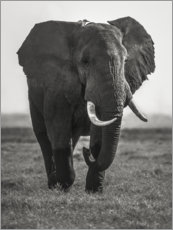 Premium poster Portrait of an elephant