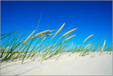 Premium poster  Dune with fine dune grass and beach grass - Reiner Würz