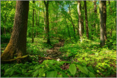 Premium poster Green forest in the Hainich National Park