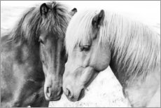 Canvas print  Cuddly ponies - Sisi And Seb
