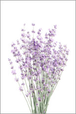 Premium poster  Fragrant lavender - Sisi And Seb
