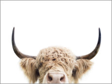 Wood print  Cuddly highland cattle - Sisi And Seb