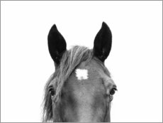 Wall sticker  Horse Portrait - Sisi And Seb