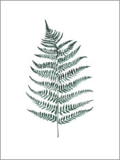 Wall sticker  Silverfern - Mantika Studio