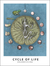 Premium poster  Cycle of life - Wunderkammer Collection