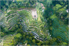 Premium poster  Rice terraces of Bali - Matteo Colombo