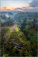 Premium poster  Rice fields and volcano, Bali - Matteo Colombo