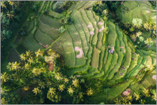 Canvas print  Rice field from above, Bali - Matteo Colombo
