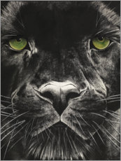Acrylic print  Panthers face - Rose Corcoran